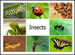 insects1-cover